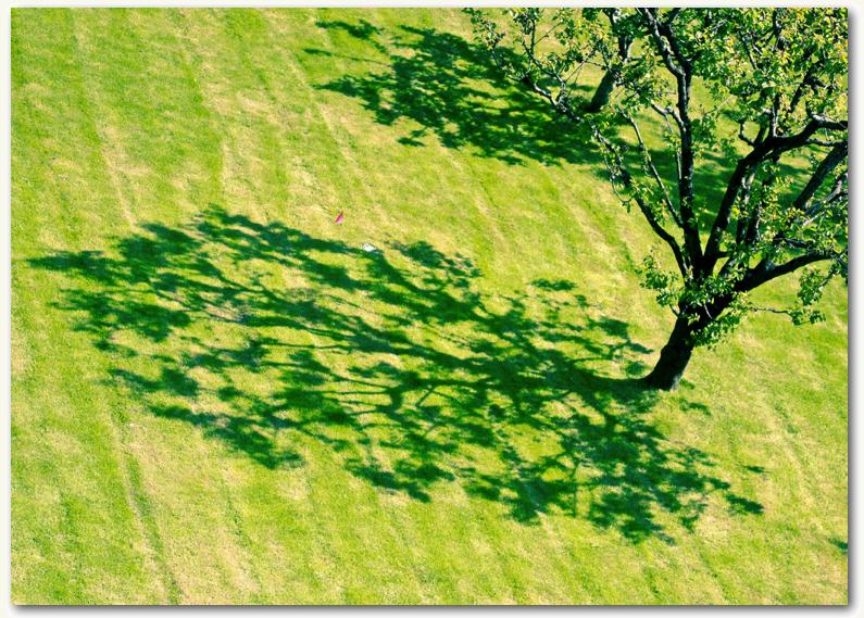 Tree Shadow Final